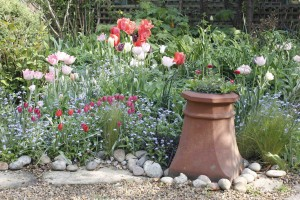 tulipborder low res_3773